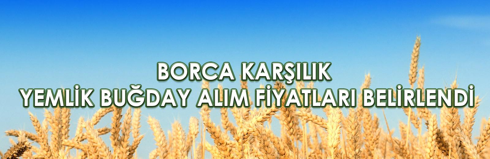 Borca Karşılık Yemlik Buğday Alım Fiyatları Belirlendi